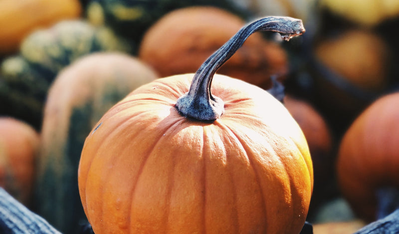 Don't Get Rid of Your Pumpkin Seeds!