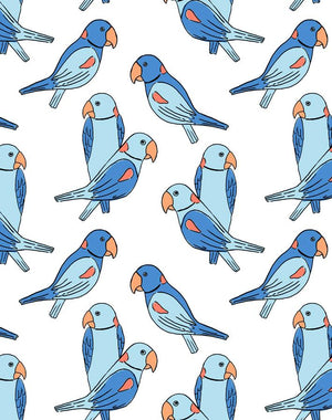 Alexandrine Parakeet Blue Wallpaper