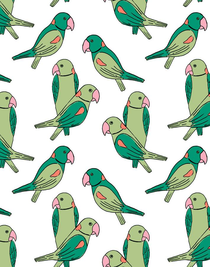 Alexandrine Parakeet Green Wallpaper