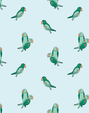 Alexandrine Parakeet Small Pale Blue  Wallpaper