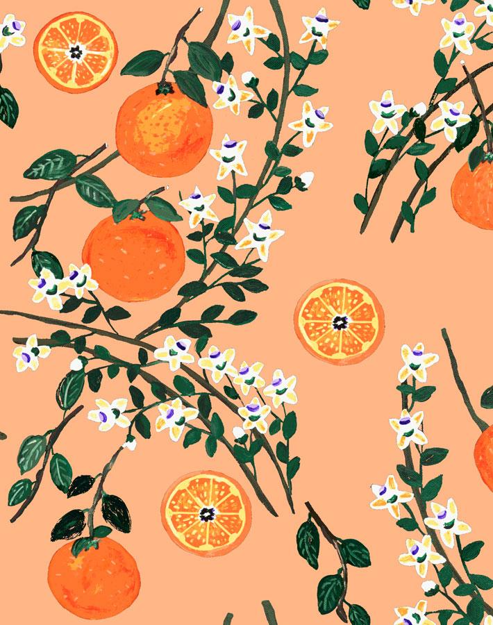 Arance Dolci - Orange Wallpaper by Carly Beck - Wallshoppe Removable & Traditional Wallpaper