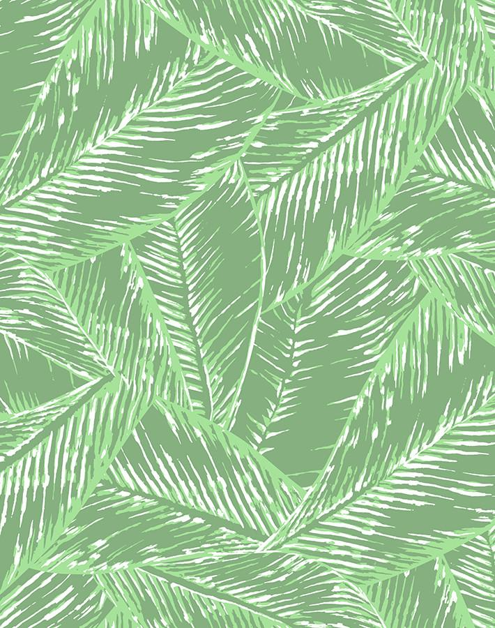 Best Fronds Green  Wallpaper