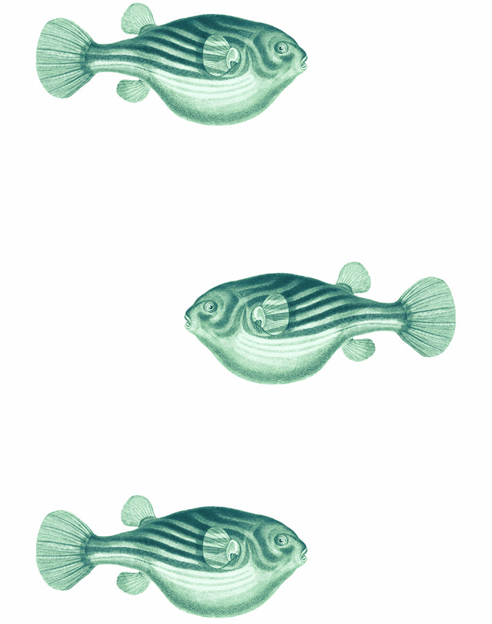 Blowfish Wallpaper - Green - Wallshoppe