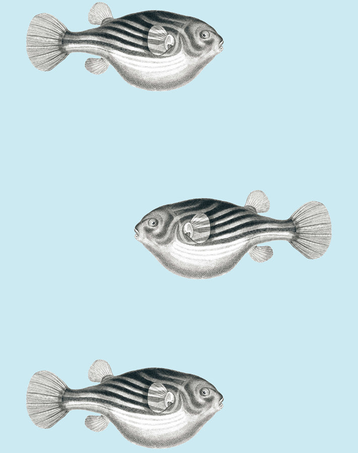 Blowfish Wallpaper - Sky - Wallshoppe