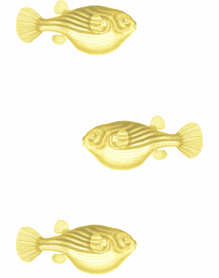 Blowfish Removable Wallpaper - Yellow - Wallshoppe