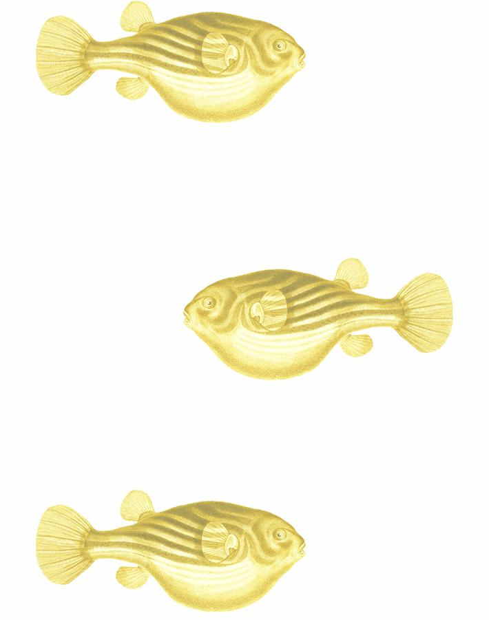 Blowfish Yellow  Wallpaper