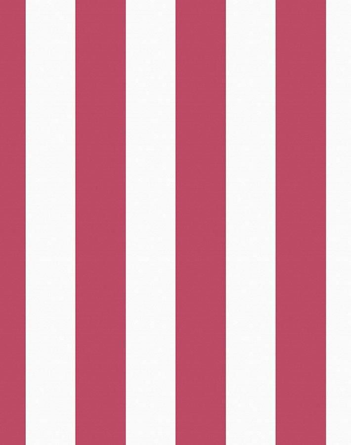 Candy Stripe Rose  Wallpaper