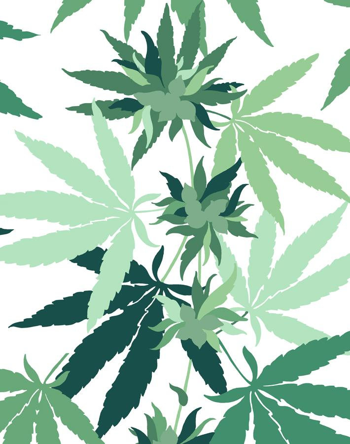 Cannabis by Nathan Turner - White - Wallshoppe