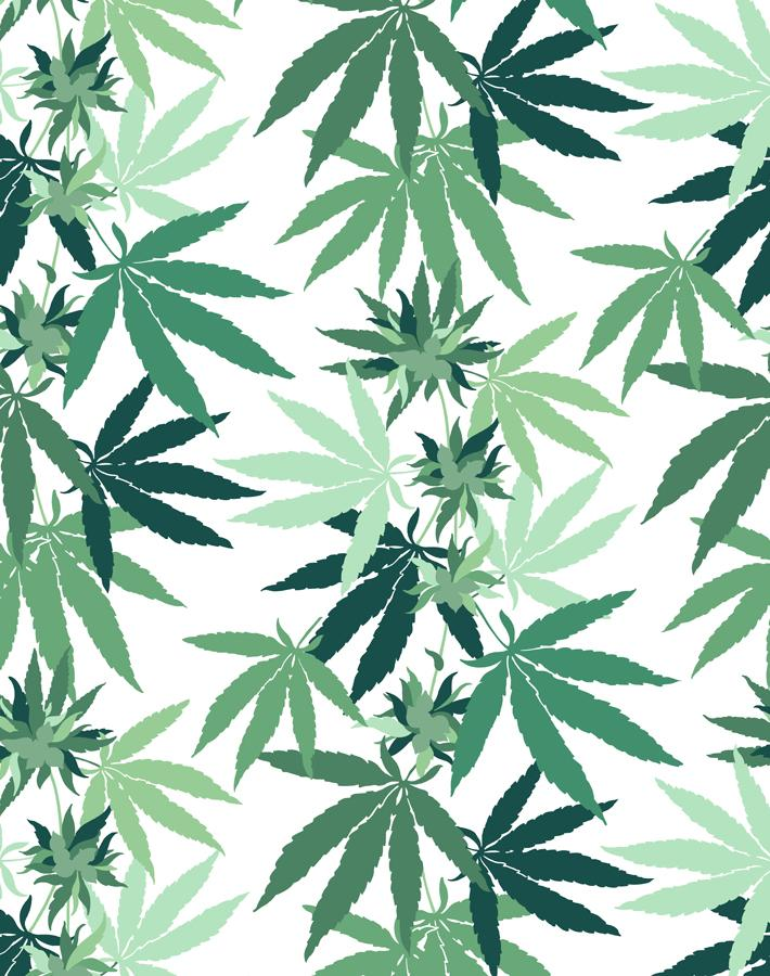 Cannabis White  Wallpaper