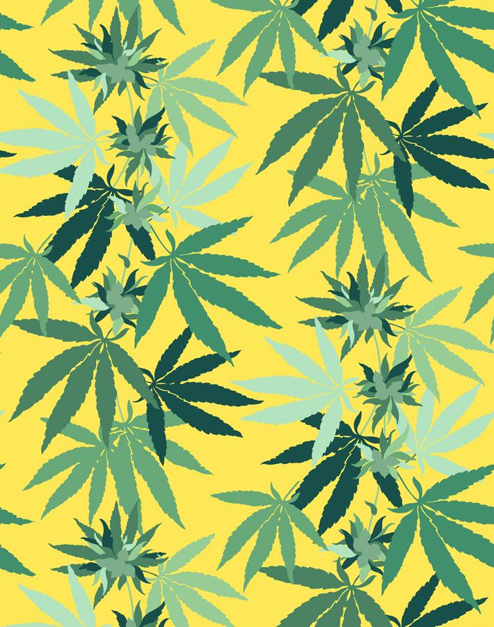 Cannabis Daffodil  Wallpaper