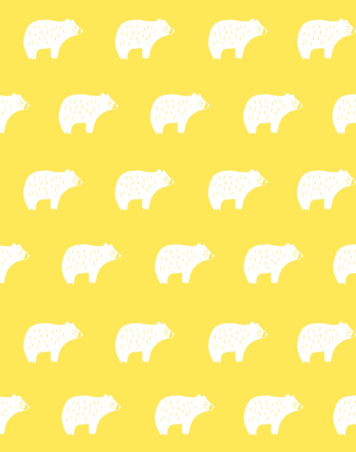 Chubby Bear Daffodil  Wallpaper