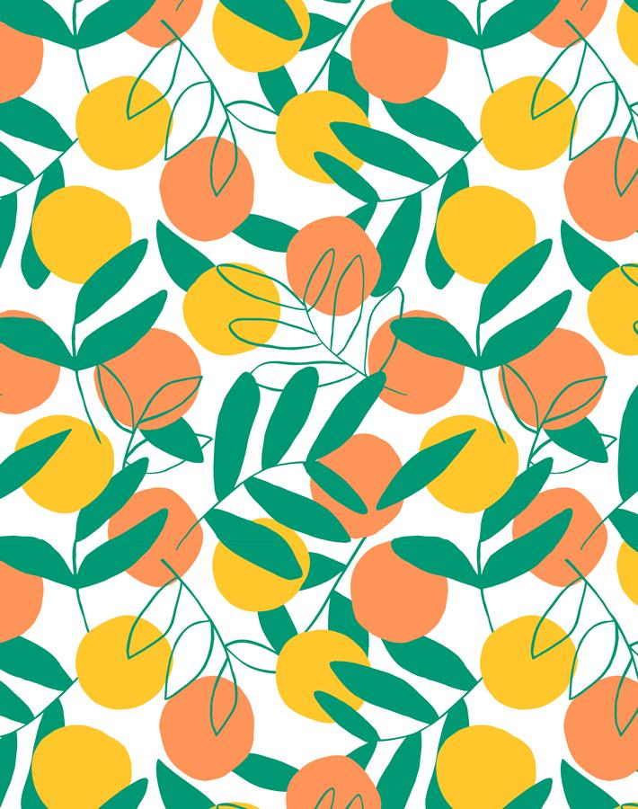 Citrus Creamsicle  Wallpaper