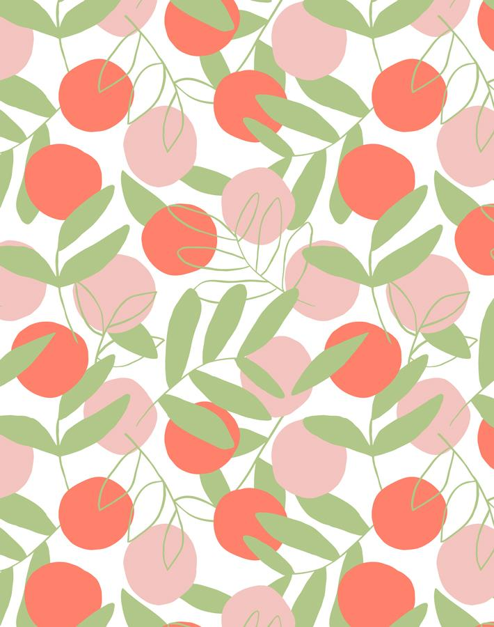 Citrus Persimmon  Wallpaper