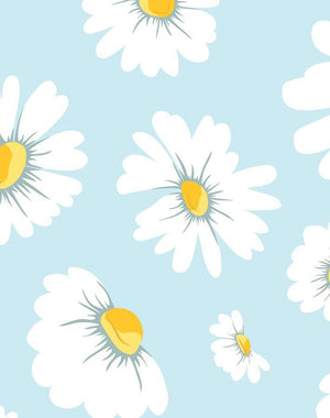 Daisy Bloom Baby Blue  Wallpaper