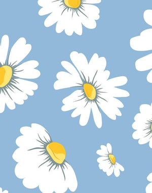 Daisy Bloom Cornflower  Wallpaper