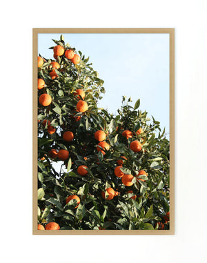 East Ojai Orange Tree by Nathan Turner