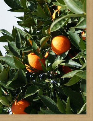 Artshoppe East Ojai Orange Tree by Nathan Turner