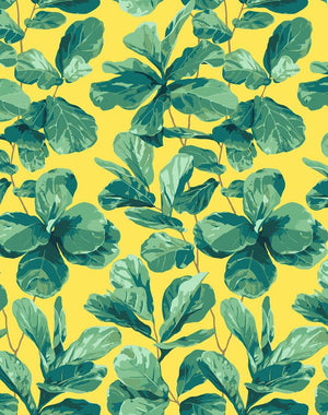 Fiddle Fig Daffodil  Wallpaper