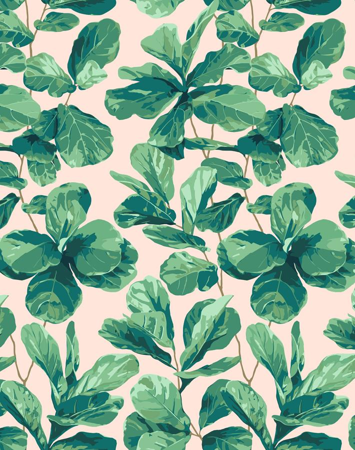 Fiddle Fig Peach  Wallpaper