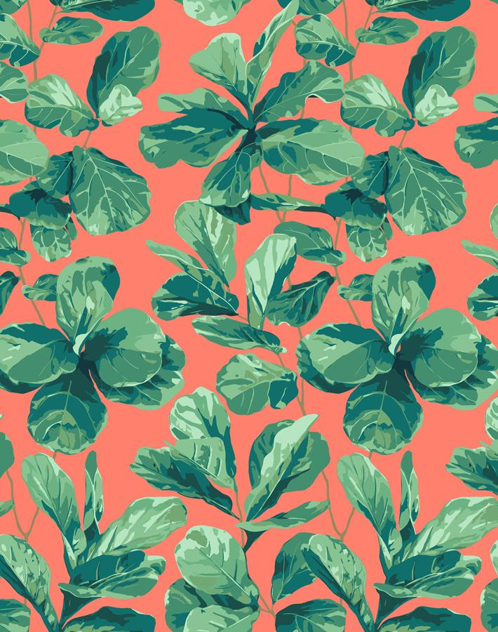 Fiddle Fig Watermelon  Wallpaper
