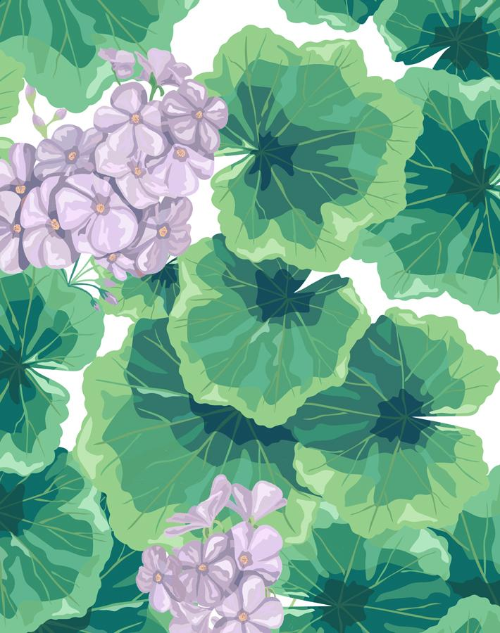 Geranium Lavender  Wallpaper