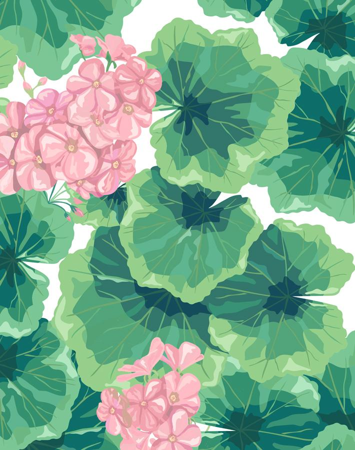 Geranium Pink  Wallpaper