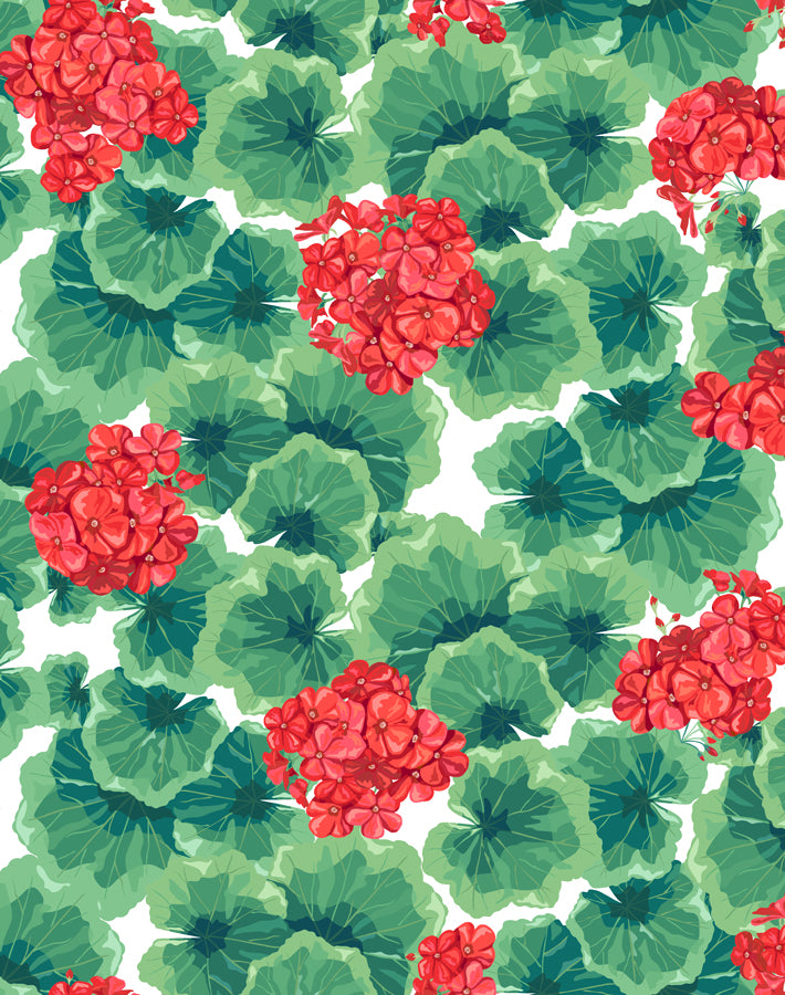 Geranium Red  Wallpaper