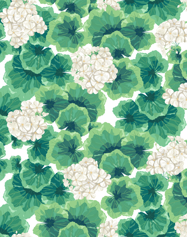 Geranium White  Wallpaper