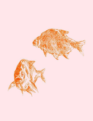 Goldfish Pink  Wallpaper