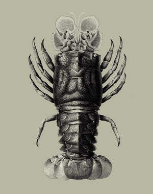 Jack The Crustacean Antique  Wallpaper
