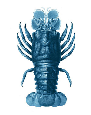Jack The Crustacean Blue  Wallpaper