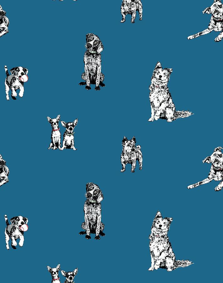Mutts Cadet Blue  Wallpaper