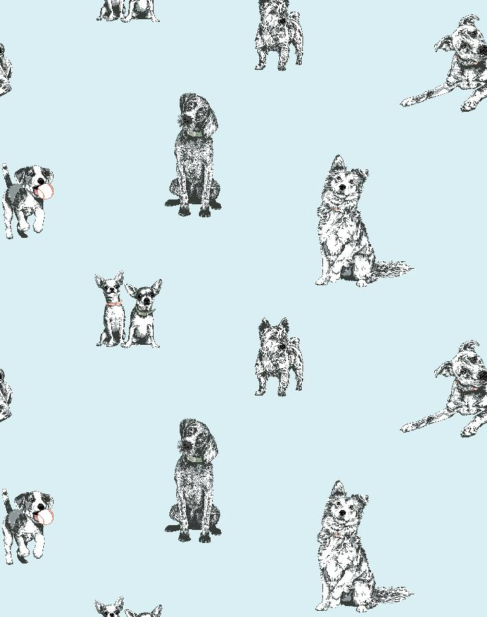 Mutts Sky  Wallpaper