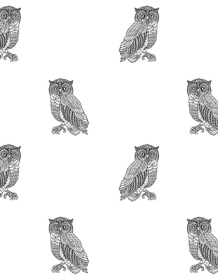 Otus The Owl Onyx On White  Wallpaper