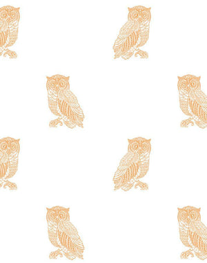 Otus The Owl Pushpop On White  Wallpaper