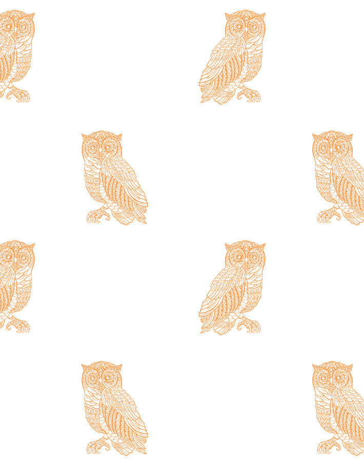 Otus the Owl Wallpaper - Pushpop