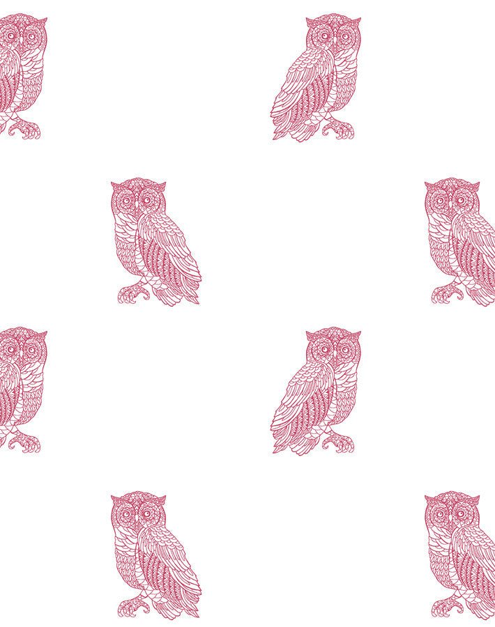 Otus the Owl Wallpaper - Rose