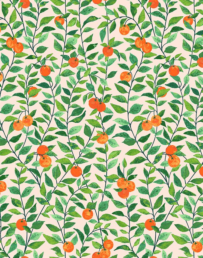 Orange Crush Peach  Wallpaper