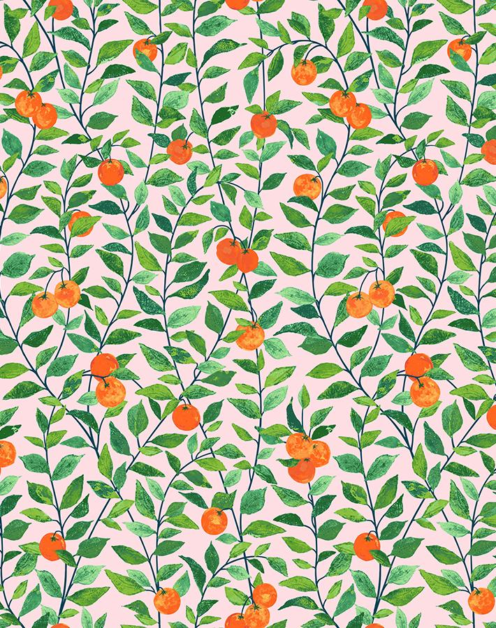Orange Crush Pink  Wallpaper