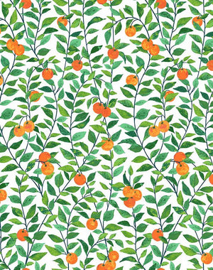 Orange Crush White  Wallpaper