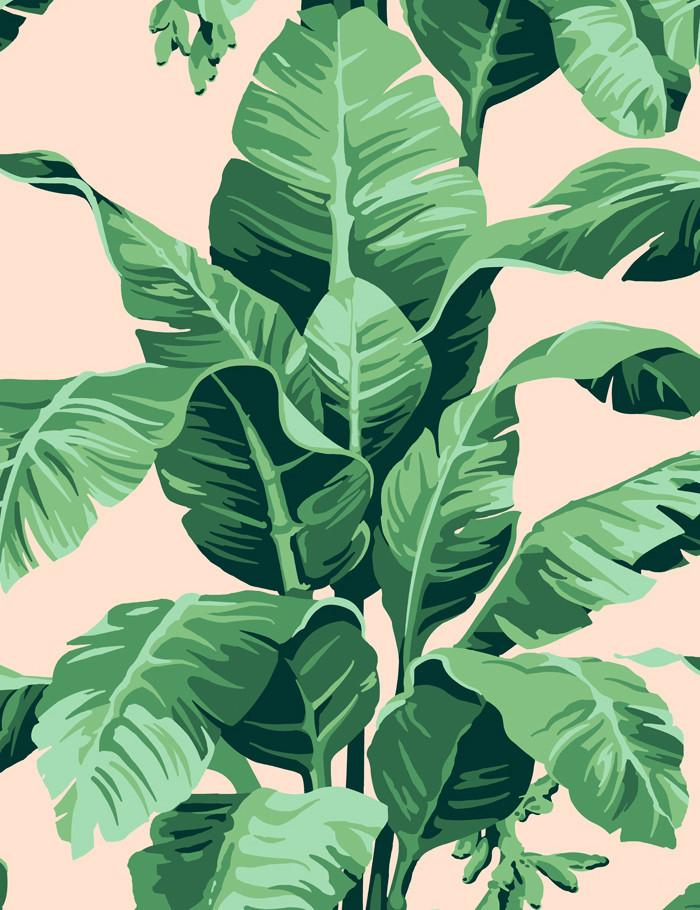 Pacifico Palm Peach  Wallpaper