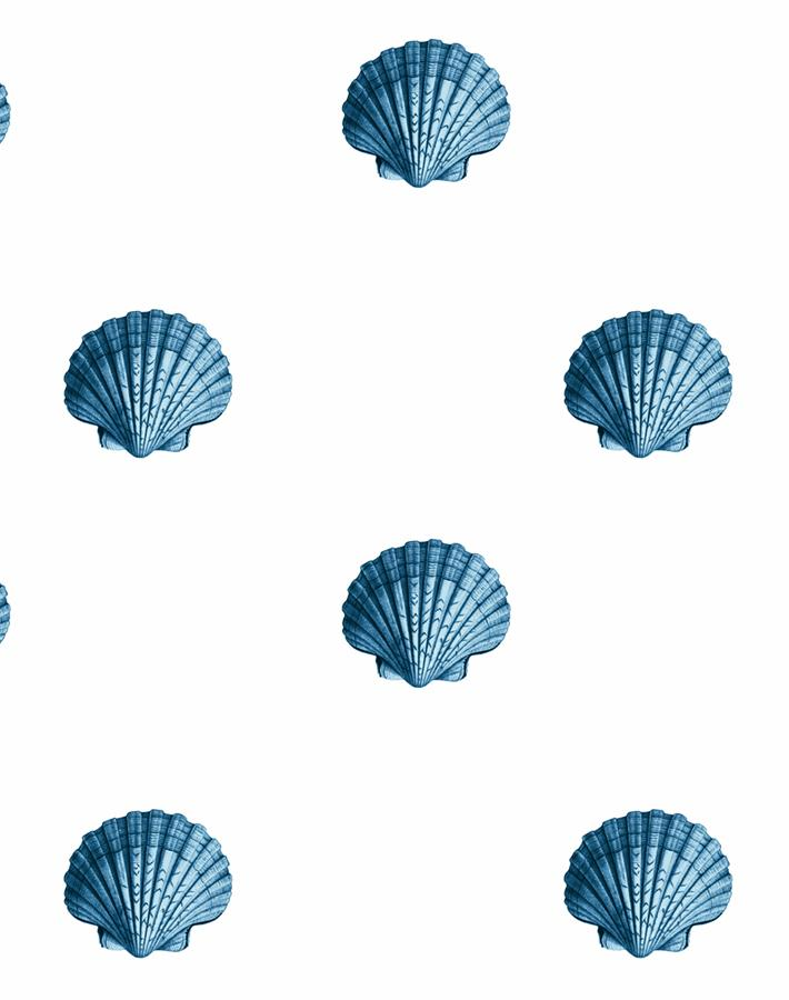 Seashell Blue  Wallpaper
