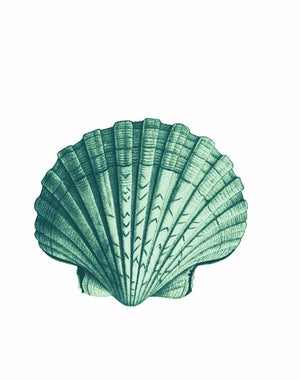 Seashell Green  Wallpaper