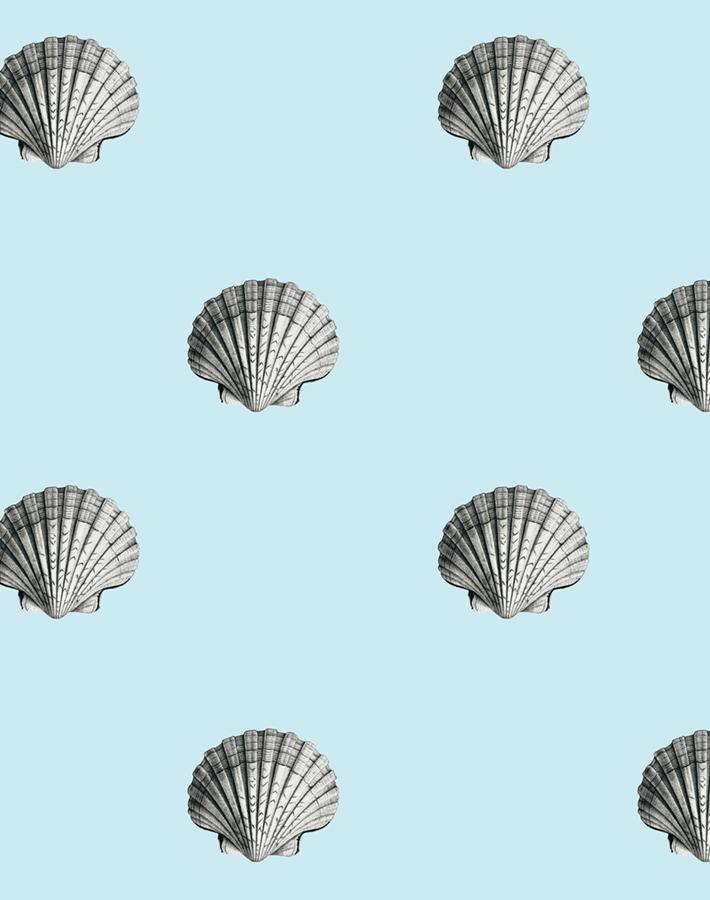 Seashell Sky  Wallpaper