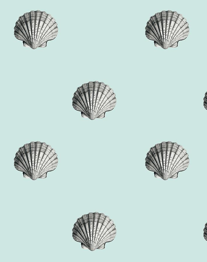 Seashell Seafoam  Wallpaper