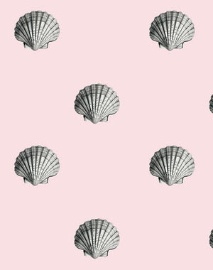 Seashell Shell  Wallpaper