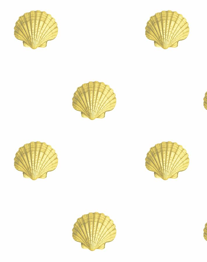 Seashell Yellow  Wallpaper