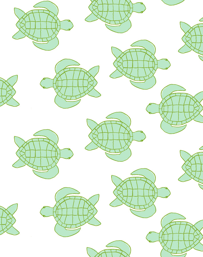 Trailingturtles Caribbean  Wallpaper