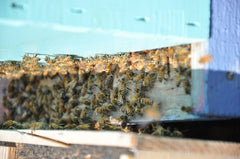 15 bees walk into hive from package cage