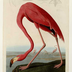 100% Hand Painted Oil on Canvas - Audubon - American Flamingo - Plate 431 (original)